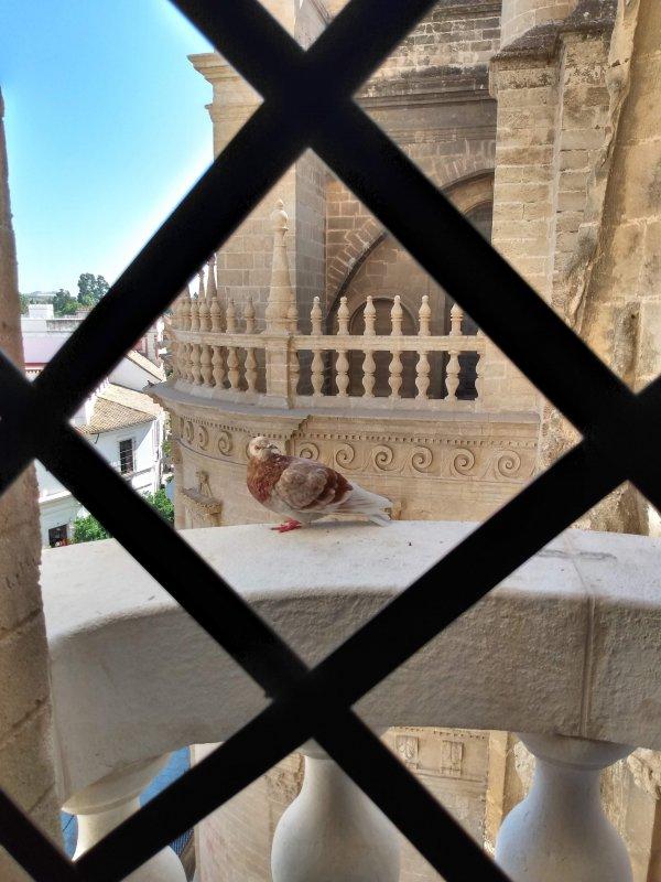 SevilleCathedralPigeon.jpg