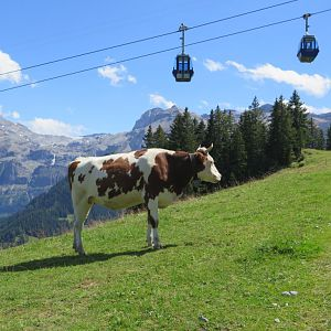 Swiss Alps - Lenk