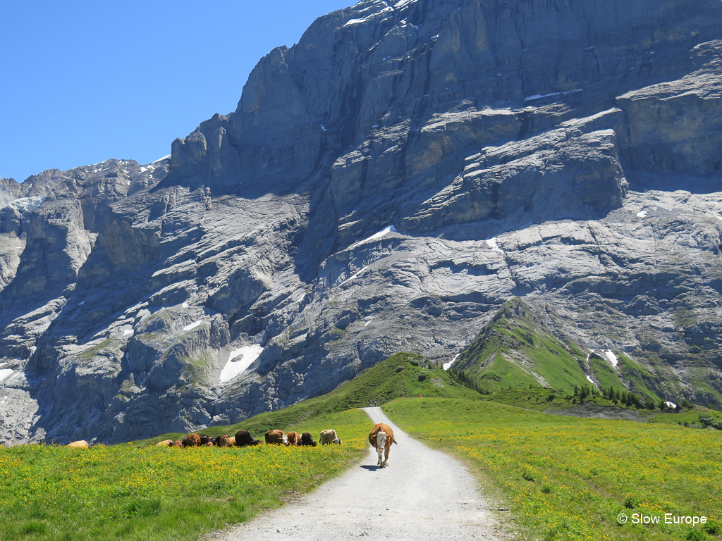 Hiking in Grindelwald